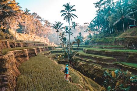 Rice terrace in Bali