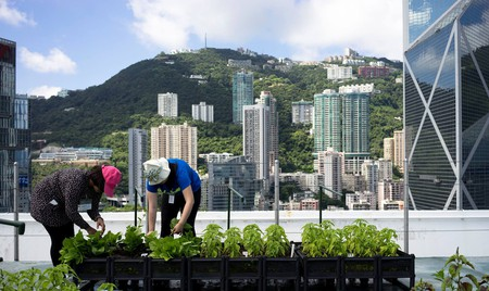 The number of rooftop farms in Hong Kong continues to increase