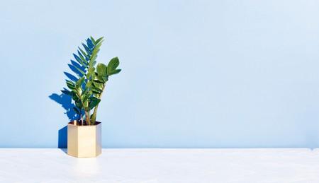 Zanzibar gem from 'The Little Book of House Plants'