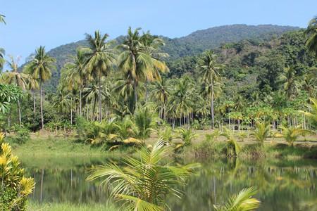 Dense Amazon jungle