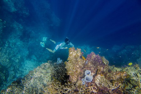 Free dive at Derawan, Borneo, Indonesia