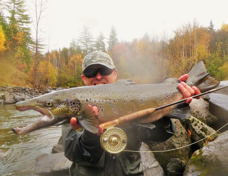 Landlocked salmon