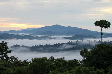 Danum Valley Conservation Area is home to some of the most endangered species in Sabah