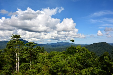 Tropical rainforest of Danum Valley