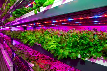 Vertical farming is taking off in the UAE