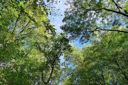 Inside Hambach Forest