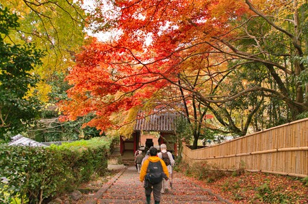 Autumn in Kyoto | © Kyoto-Picture / Flickr