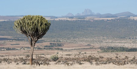 Lewa Downs, looking towards, Mount Kenya.