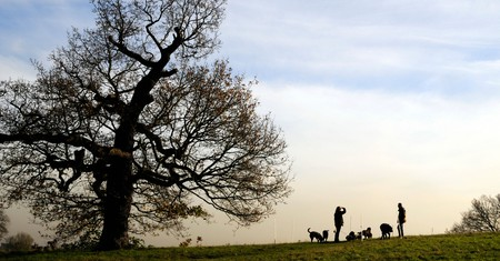 Walkers on Hampstead Heath, London