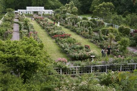 The Cranford Rose Garden at the Brooklyn Botanic Garden has over 5,000 bushes