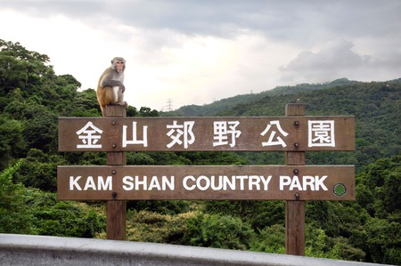 Kam Shan Country Park, also known as Monkey Mountain, Hong Kong