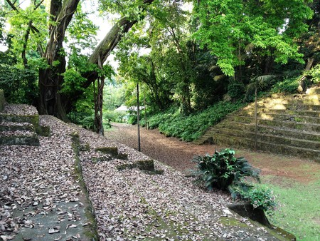Limbe Botanic Garden features a number of exotic crop species