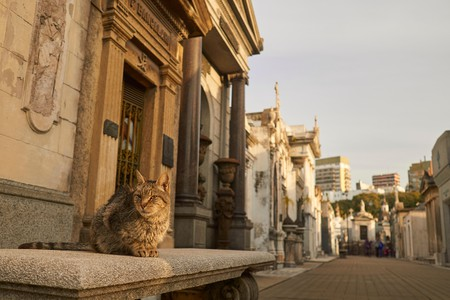 La Recoleta Cemetery is home to dozens of cats