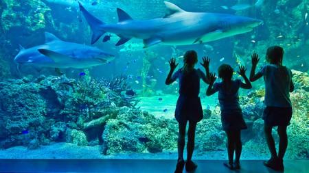 Admire sharks at Sydney Aquarium