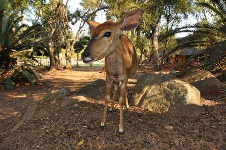 Close encounters with wildlife in Mlilwane Wildlife Sanctuary