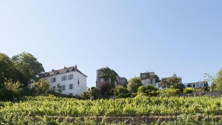 Vineyard of the Clos Montmartre, Rue Saint Vincent, Montmartre, Paris.