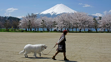 Mount Fuji is the highest mountain in Japan, and a must-see during your time here