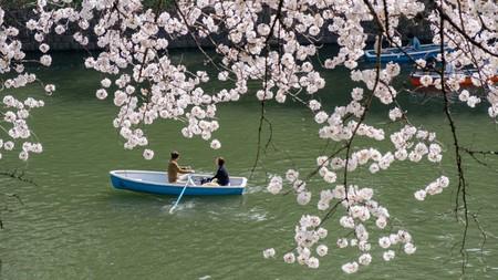 Cherry Blossom Chidorigafuchi, Tokyo