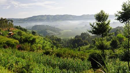 Green fertile land near the Twin Lakes Burera and  Ruhondo