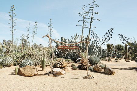 Cactus Country is home to 4,000 species of cacti from all over the world
