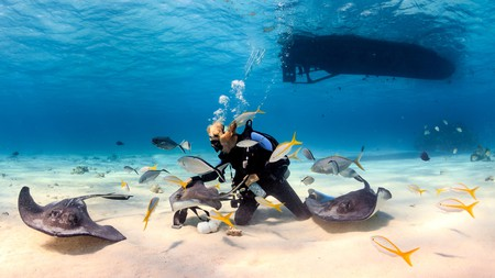 Dive with stingrays in Grand Cayman