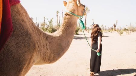 The Palmeraie, Marrakech