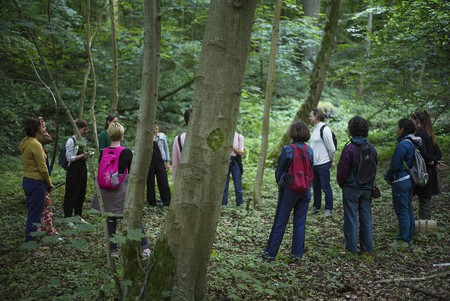 More people are participating in forest bathing to help them de-stress
