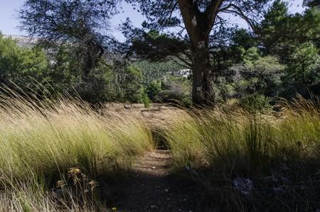 Marked hiking path on Parnitha Mountain