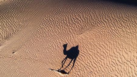 Explore the desert in Dubai