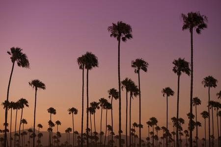 Quite a Few Palm Trees