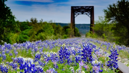 Seeing the bluebonnets in bloom in Texas is a must