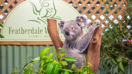 See koalas up close, taste food from around the world, hike some mountains or take ride down a water park slide, all in Sydney's western suburbs