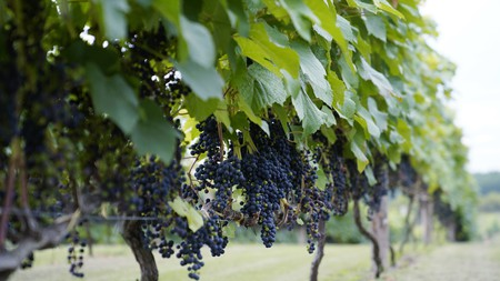 Wine has become one of the top reasons to visit northern Japan