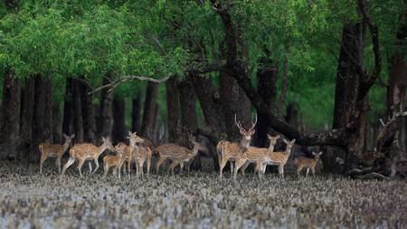 The Sundarbans West Wildlife Sanctuary in Bangladesh is home to a wide diversity of fauna