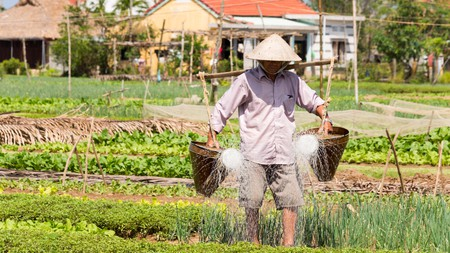 U Cafe in Hoi An gets its produce from the 300-year-old organic farm Tra Que Vegetable Village