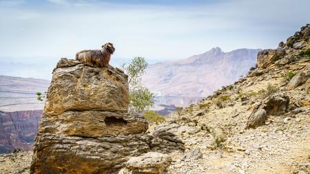 Explore the many spots of natural beauty near to Oman's capital city