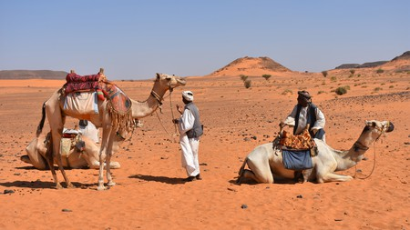 Camels are a big part of Sudanese culture