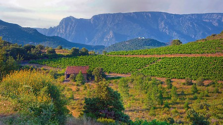 The Languedoc-Roussillon region is responsible for more than a third of France's total wine production
