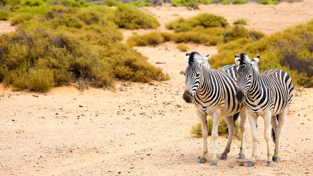 Cape Town is full of interesting experiences for the whole family