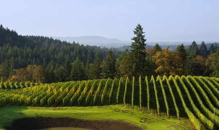 Get wines from Alexana Winery in Oregon delivered to your door