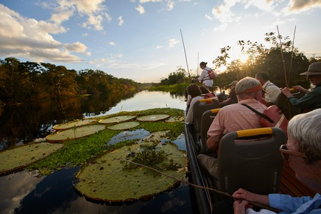 The Victoria Regia is one of the largest water lillies in the Amazon