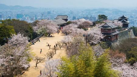 Cherry blossom and the Matsuyama Castle, Shikoku, Japan