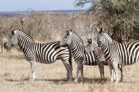 Hop online for a virtual African wild animal encounter