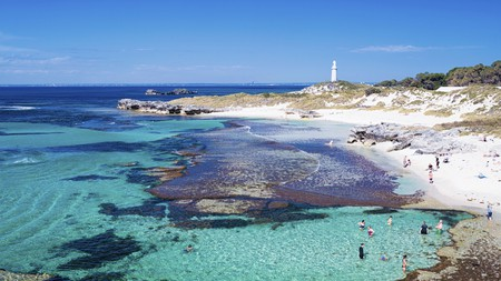 The warm waters of Rottnest Island attract a kaleidoscope of marine life