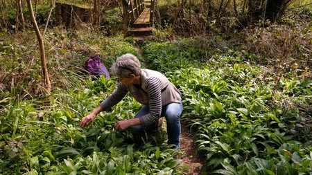 Foraging needn't be reserved for those living in the countryside