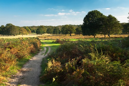 Richmond Park is beloved by Londoners for its abundance of grassy plains, ancient oak trees and deer