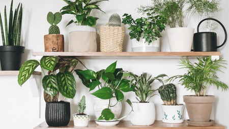 House plants not only add a splash of green to our homes, they also have many amazing health benefits