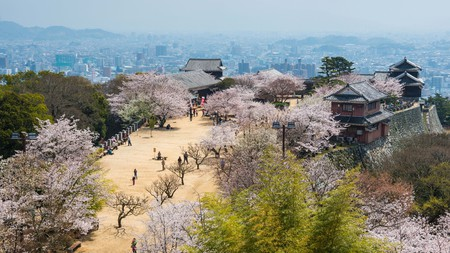 Matsuyama Castle is particularly impressive during cherry blossom season