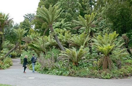 The walking path in San Francisco's Golden Gate Park is just one of the city's many outdoor delights