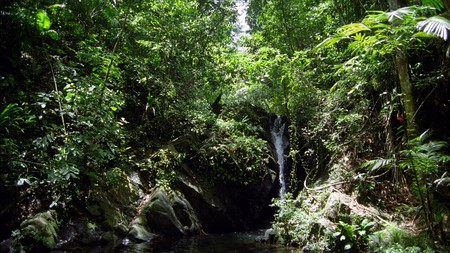 Go on a jungle adventure in the lush landscape of Belize